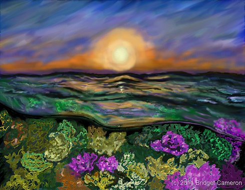 coral sea sunset by Bridget Cameron