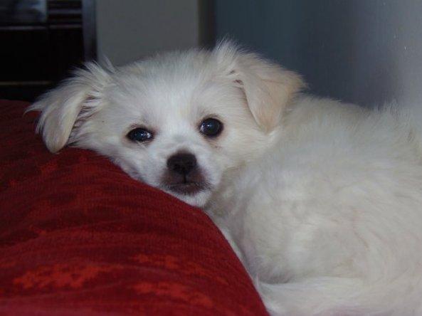 My new puppy Yuki