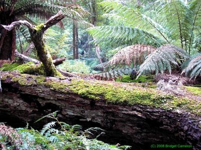 Meander, Tasmania.