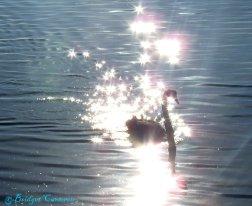 Black Swan starlight.