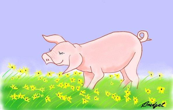 The pig that wanted to sway like the daisies by Bridget Cameron