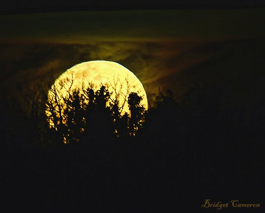 moon-rise-splendour-sfe-by-bridget-cameron