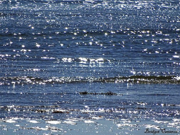 sparkly sea sfe by Bridget Cameron 1